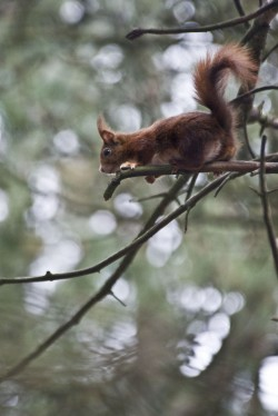 Formby Red Squirrel Walk